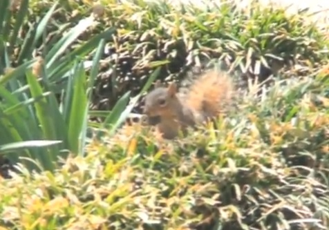 Squirrel video